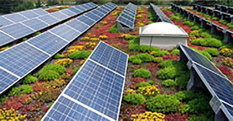 living roof panels living green roofs or solar panels now of the land