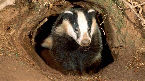 tasso alimentazione badger family sett up for in 163 313 000 home news