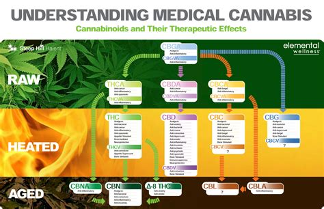 cannabis guide disease treatments using cannabis marijuana hemp extracts books medicinal cannabis treatment australia cannabis