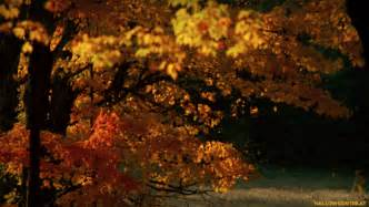 animated leaves falling gif falling leaves gif tumblr
