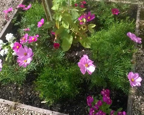 plant sale for the orchard day care and respite centre