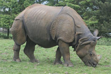 Plus de 1000 idées à propos de Rhinocéros sur Pinterest ...