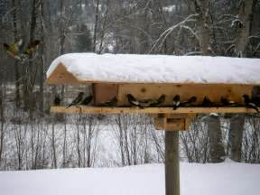 Large Bird Feeders Large Bird Feeder Pictures