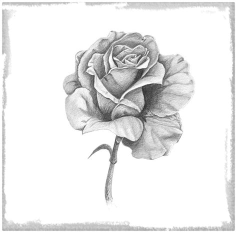 imagenes de rosas faciles dibujos de rosas facil de hacer archivos dibujos de amor