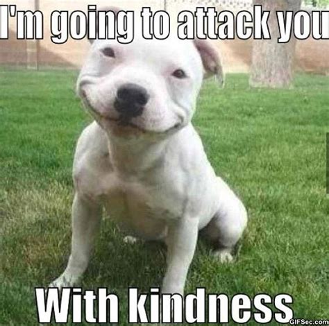 Kind Meme - kind dog funny pictures meme and gif