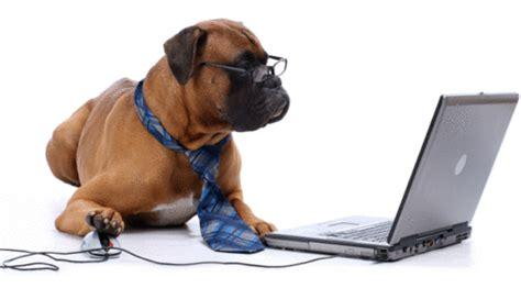 boxer dog haircut top 20 des photos de chiens plus intellos que leur ma 238 tre