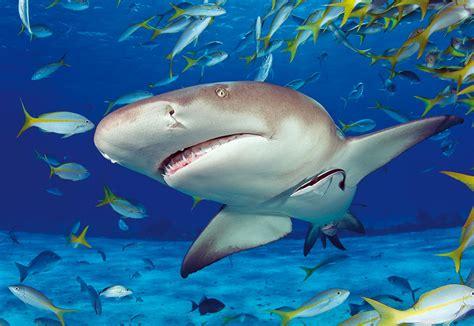 imagenes de la vida bajo el mar la vida bajo el mar puzzlepassion
