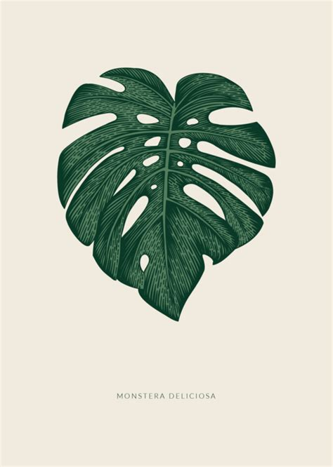 Poster Monstera poster monstera blad hele collectie prints posters