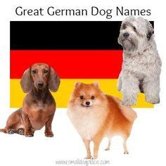 great puppy names names on names small dogs and puppy names
