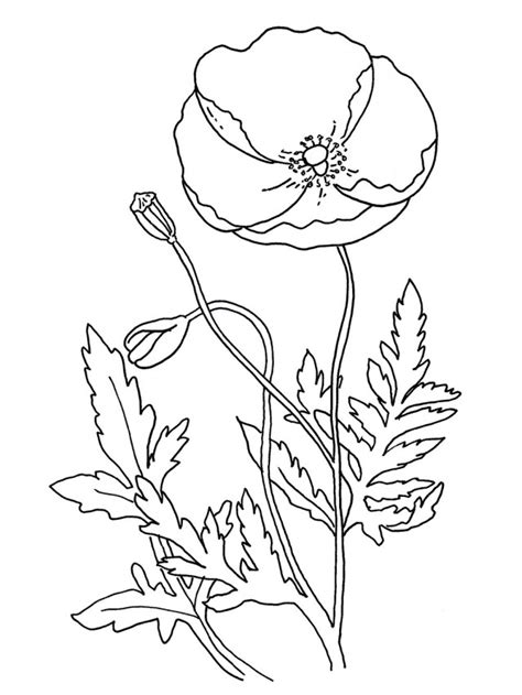 coloring page of a poppy flower poppy flowers coloring pages download and print for free