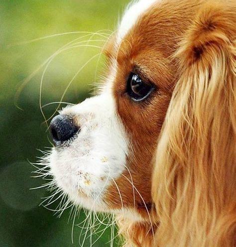 puppy profile puppy profile