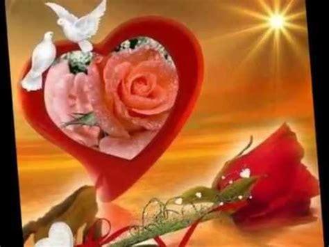 te regalo una rosa la mas hermosa la mas bella de todas las flores mas lindas del mundo doovi