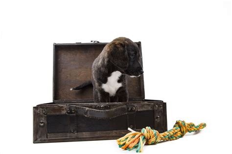 puppy suitcase puppy with suitcase free stock photo domain pictures