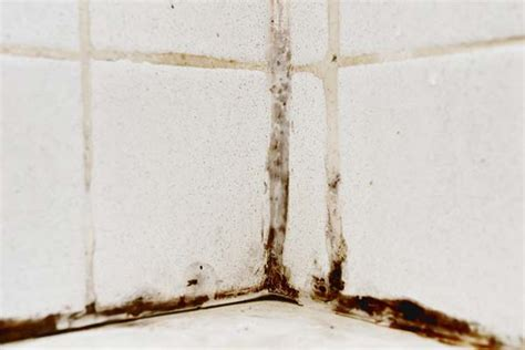 mold in bathroom wall how to remove mold from walls in bathroom complete tips