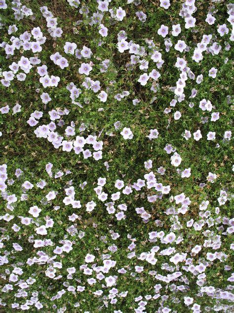 white flowering ground cover round designs