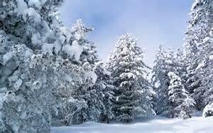 White winter trees windows 8 1 theme all for windows 10 free