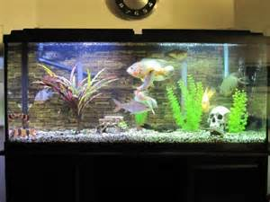50 Gallon Fish Tank   Everything Included for sale in Kamloops