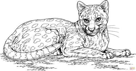 Ocelot Wild Cat Coloring Page Free Printable Coloring Pages Ocelot Coloring Page
