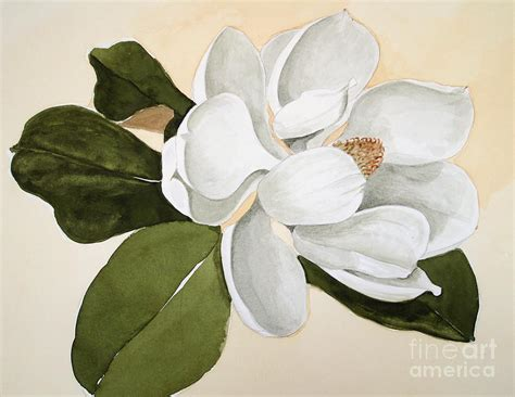 magnolia bloom painting by nancy kane chapman