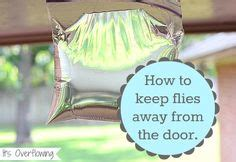 flies outside on fly traps repel