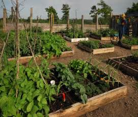Square foot gardening is traditionally raised in beds there is less