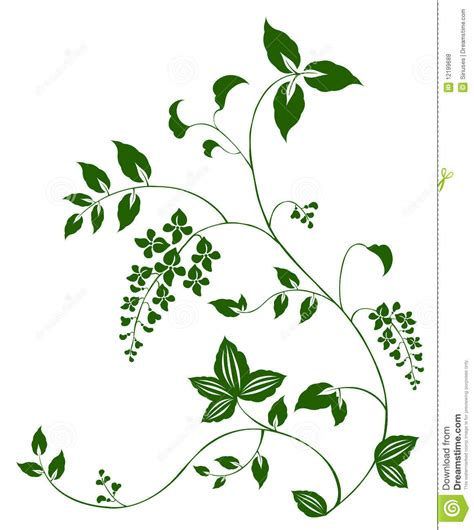 drawing vines pattern flower and vine pattern stock illustration image of