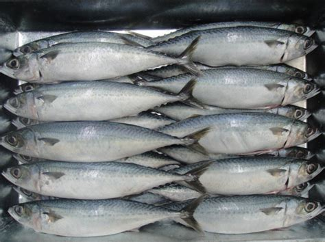 Kepala Ikan Salmon Segar Beku Frozen Seafood alibaba manufacturer directory suppliers manufacturers exporters importers