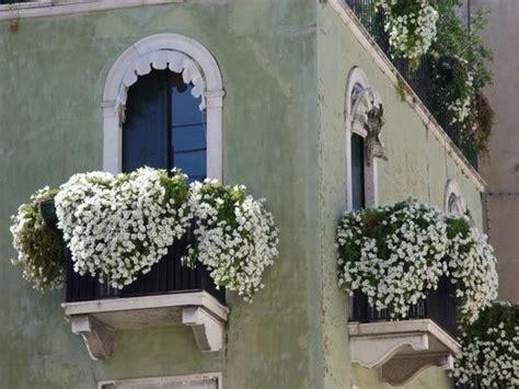 balconi fioriti d inverno oltre 25 fantastiche idee su fiori da balcone su