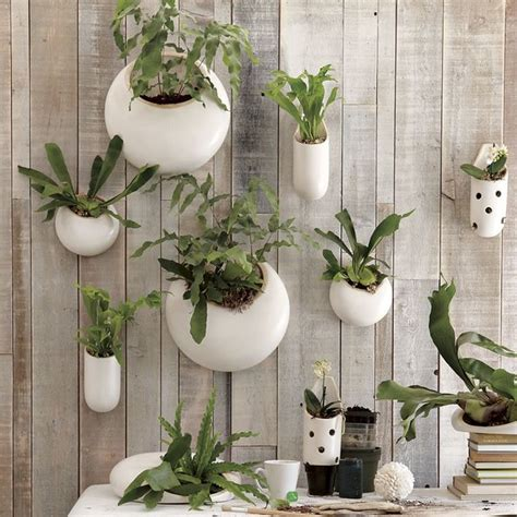 hanging wall planters indoor shane powers ceramic wall planters contemporary indoor pots planters by west elm