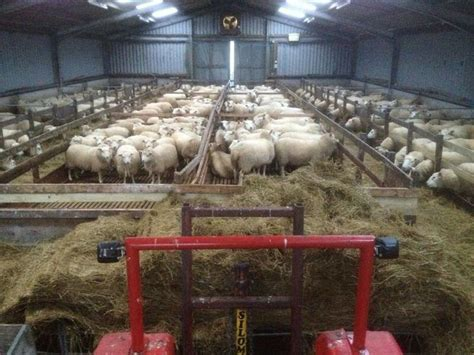 Barn Designs Plans by Sheep Shed Lambing Shed Amp Sheep Equipment Pinterest