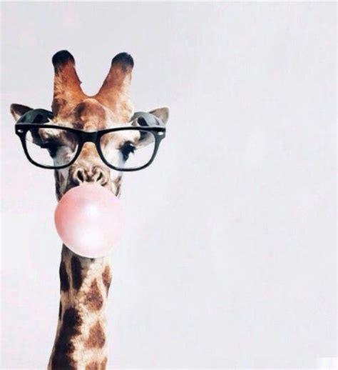 giraffe wallpaper pinterest hipster giraffes pinterest hipsters wallpaper and