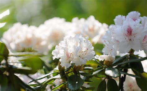 albergo co dei fiori disponibilit 224 delle fleuralp hotel vicino a merano