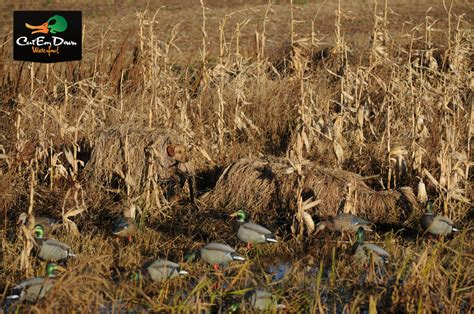 layout blind winter wheat cover avery greenhead gear ghg killer ghillie layout blind w