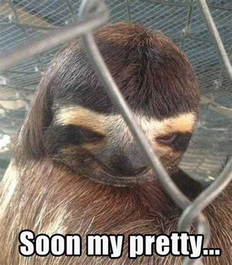 Funny Sloth Pictures Meme - funniest animal memes of the week
