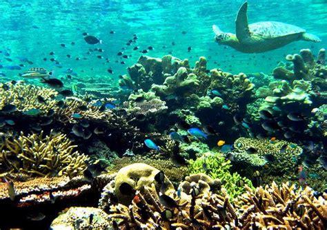 Borneo Vid dyka sista minuten och restresor