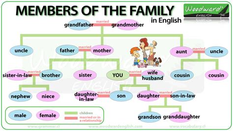 getting a family member sectioned family members english vocabulary