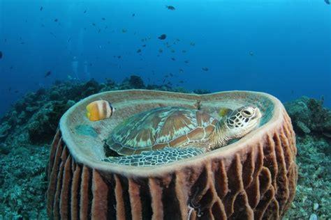 Motorrad Kr Mmer Englisch by Unterwasser Riff Ozean Indonesien Reptil Gili Schildkr 246 Te