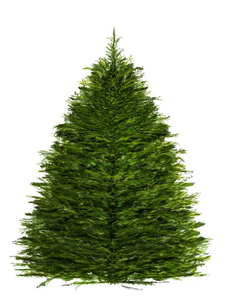 christmas tree photoshop
