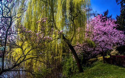 Weiß Blühende Blumen by Die 88 Besten Fr 252 Hling Hintergrundbilder