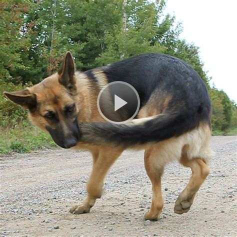 why do dogs their tails why do dogs their tails
