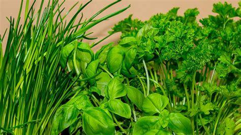 Piante In Cucina by Piante Aromatiche E Piante Medicinali Per Orto Balcone