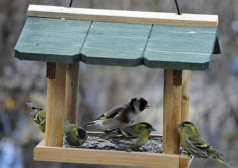 feeding the birds in your own backyard this winter