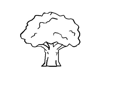 narra tree coloring page line art tree clipart best