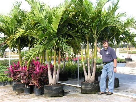 christmas palm tree christmas decor inspirations