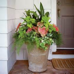 25 best ideas about container plants on pinterest