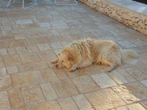 pavimento pietra naturale pavimento in pietra naturale anticato origine pietra