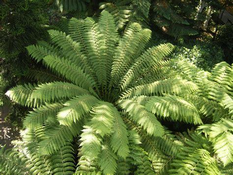 file tree fern at kew garden steve parker jpg