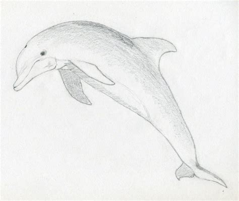 how to sketch draw a dolphin jus 4 kidz