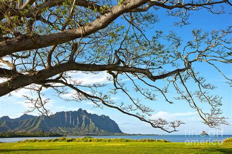 Landscaping Oahu Oahu Landscape Photography Photograph By Anthony Calleja