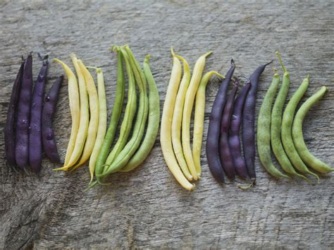 guide to string beans from green to purple